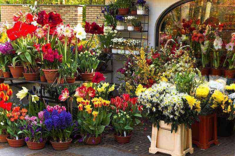Florist zone